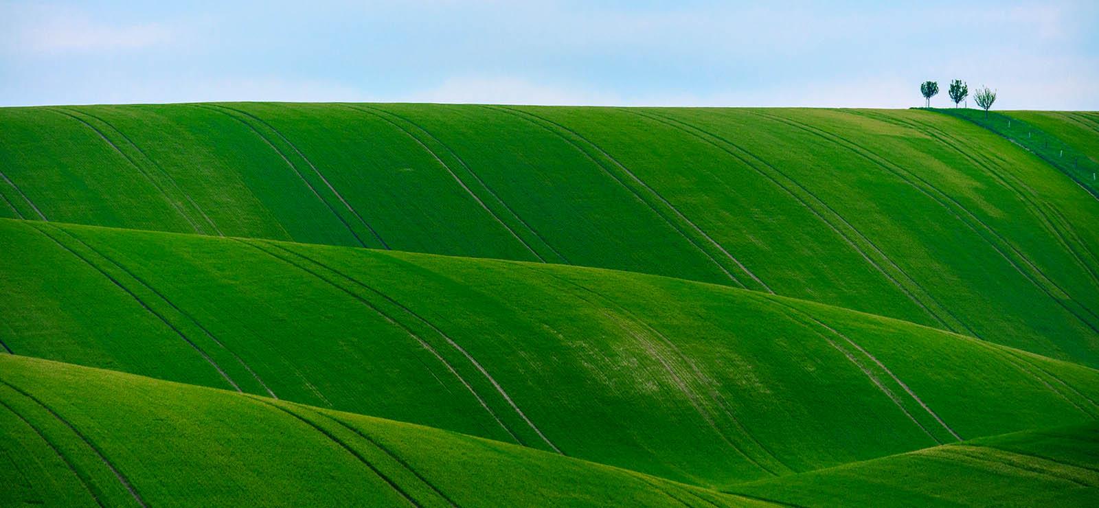緑(グリーン)のスピリチュアル、風水的エネルギーとは。緑の効果、開運グッズ。