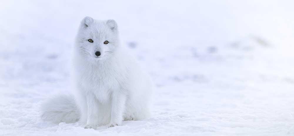 白(ホワイト)のスピリチュアル、風水的エネルギーとは。白の効果、開運グッズ。
