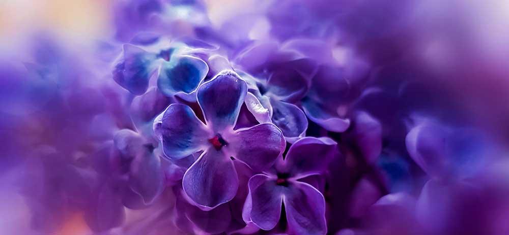 紫色のオーラの人の特徴や意味を徹底解説。性格・人生傾向・恋愛傾向・課題などのオーラ診断。