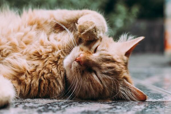 猫が出てくる夢の意味とは?たくさん、なつく、抱っこするなど