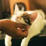 【夢占い】猫が出てくる夢の意味は?吉夢?基本〜状況・種類別に解説!