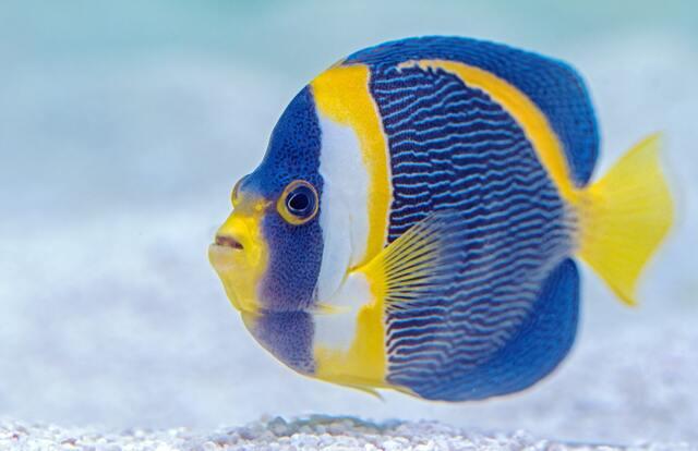 派手な色の魚