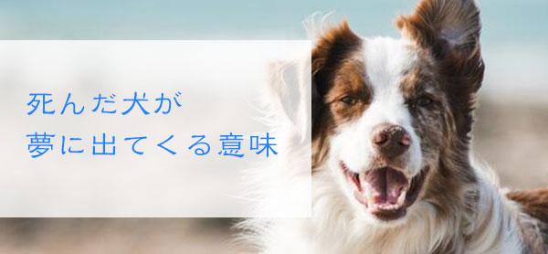【夢占い】死んだ犬が夢に出てくる意味!夢でもまた亡くなる場合は何かの警告?