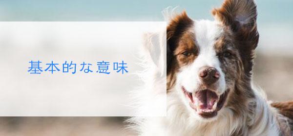 死んだ犬の夢を見る基本的な意味