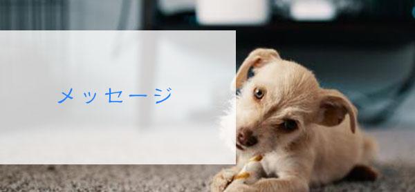 死んだ犬が出てくる夢からのメッセージ