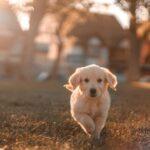 【開運夢占い】犬が出てくる夢の意味!運気が上がる前触れ?