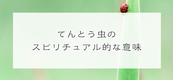 【幸運!恋愛運!】てんとう虫のスピリチュアル的な意味